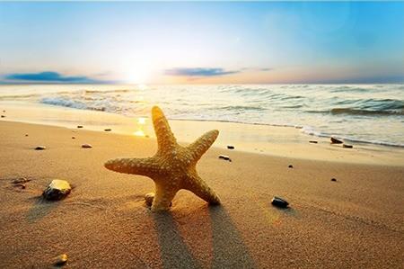 Πίνακας ζωγραφικής Starfish
