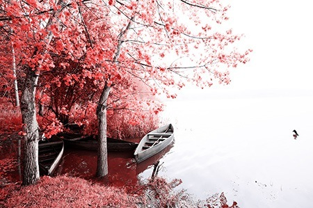Red trees near the lake