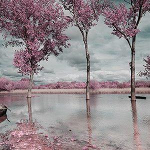 Πίνακας ζωγραφικής Landscape