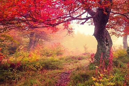 Πίνακας ζωγραφικής Red tree