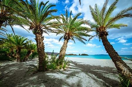 Πίνακας ζωγραφικής Palm trees