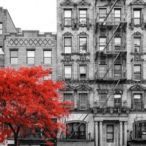 Red tree in black and white city