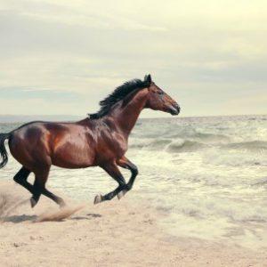 Πίνακας ζωγραφικής Wild horse