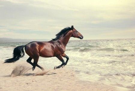 Wild horseWild horseWild horseWild horse