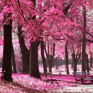 Πίνακας ζωγραφικής Pink nature