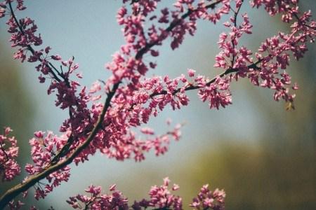 Πίνακας ζωγραφικής Branch with blossoms