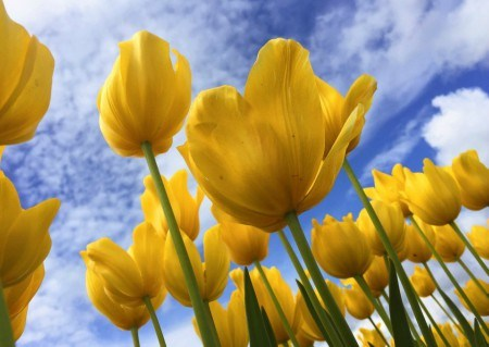 Πίνακας ζωγραφικής Yellow flowers