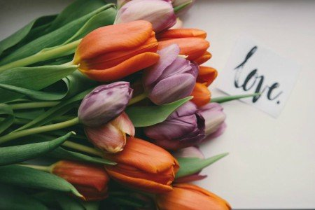 Πίνακας ζωγραφικής Tulips