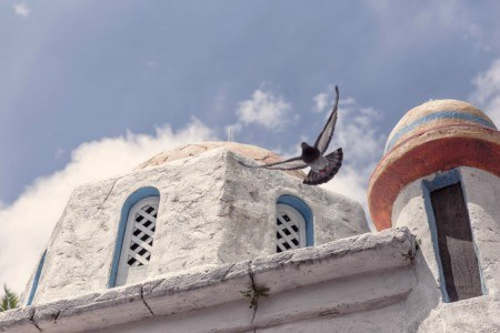Πίνακας ζωγραφικής Pigeon